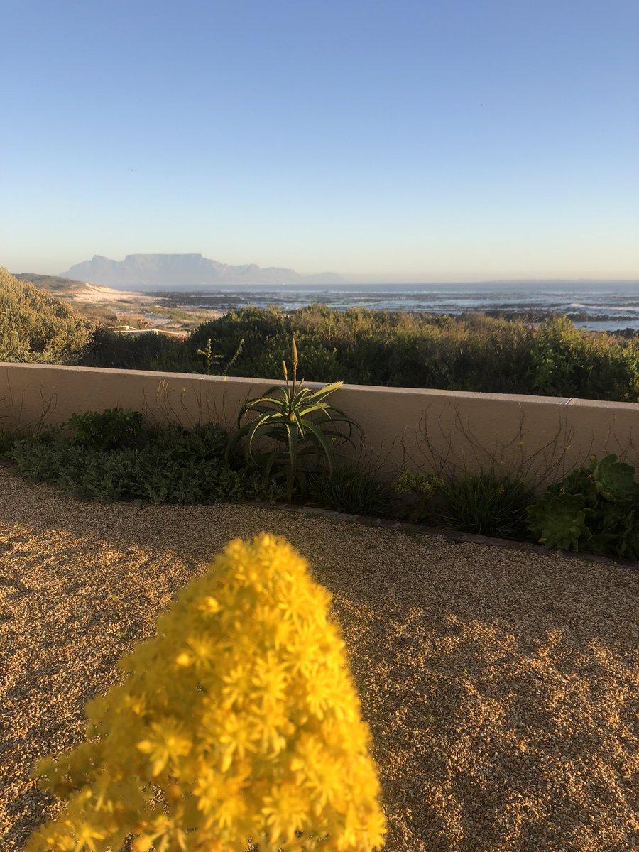 Good Morning - #westcoast #melkbosstrand #flowers #beach #tablemountain #homeview #love   #coffee pic.twitter.com/vrTYgONGNq