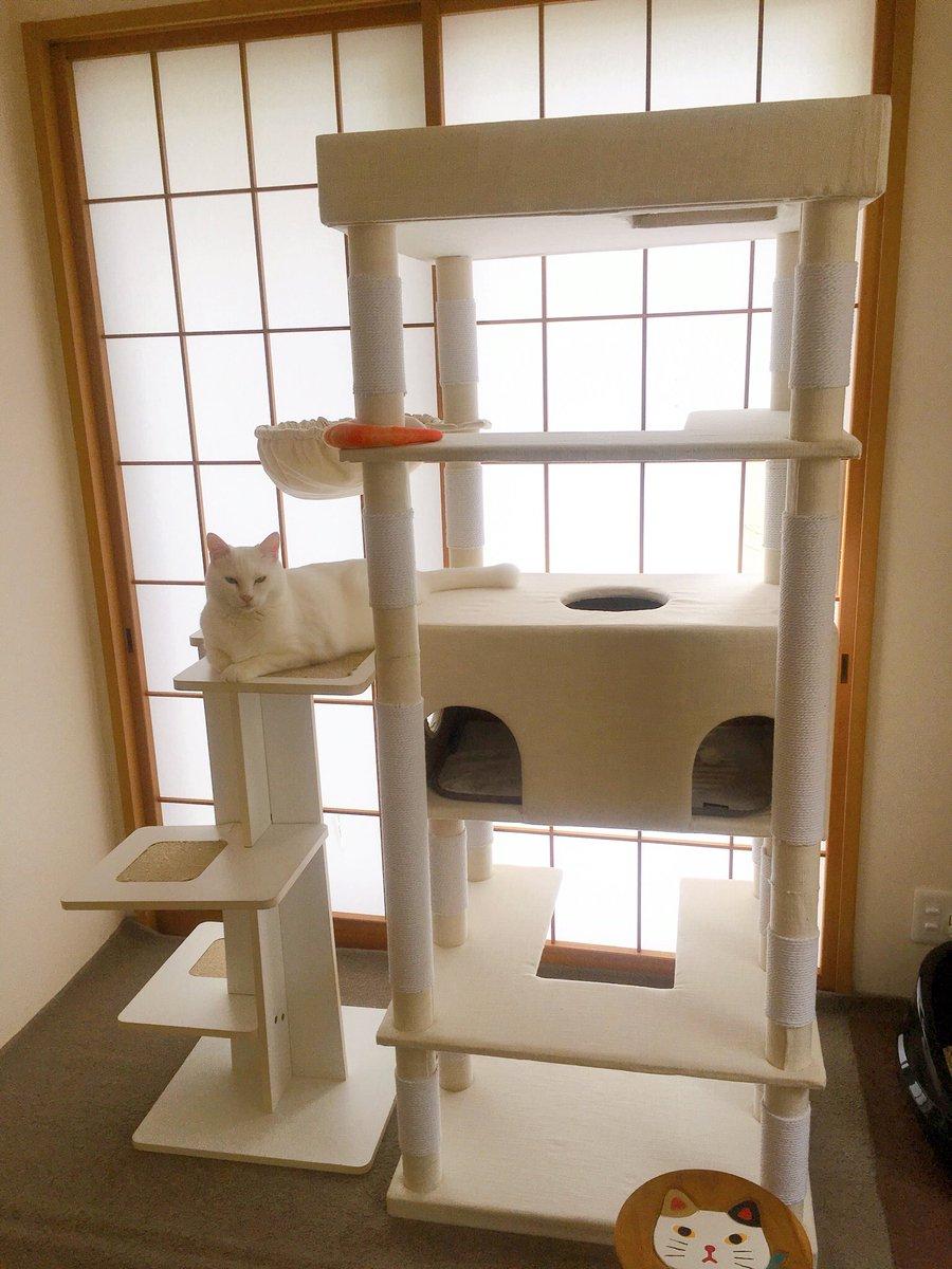 一段低くして隣に今まで使っていたタワーをくっつけてみた。移動しやすくなったかな。  #猫 #cats https://t.co/Ut9CcKYbog