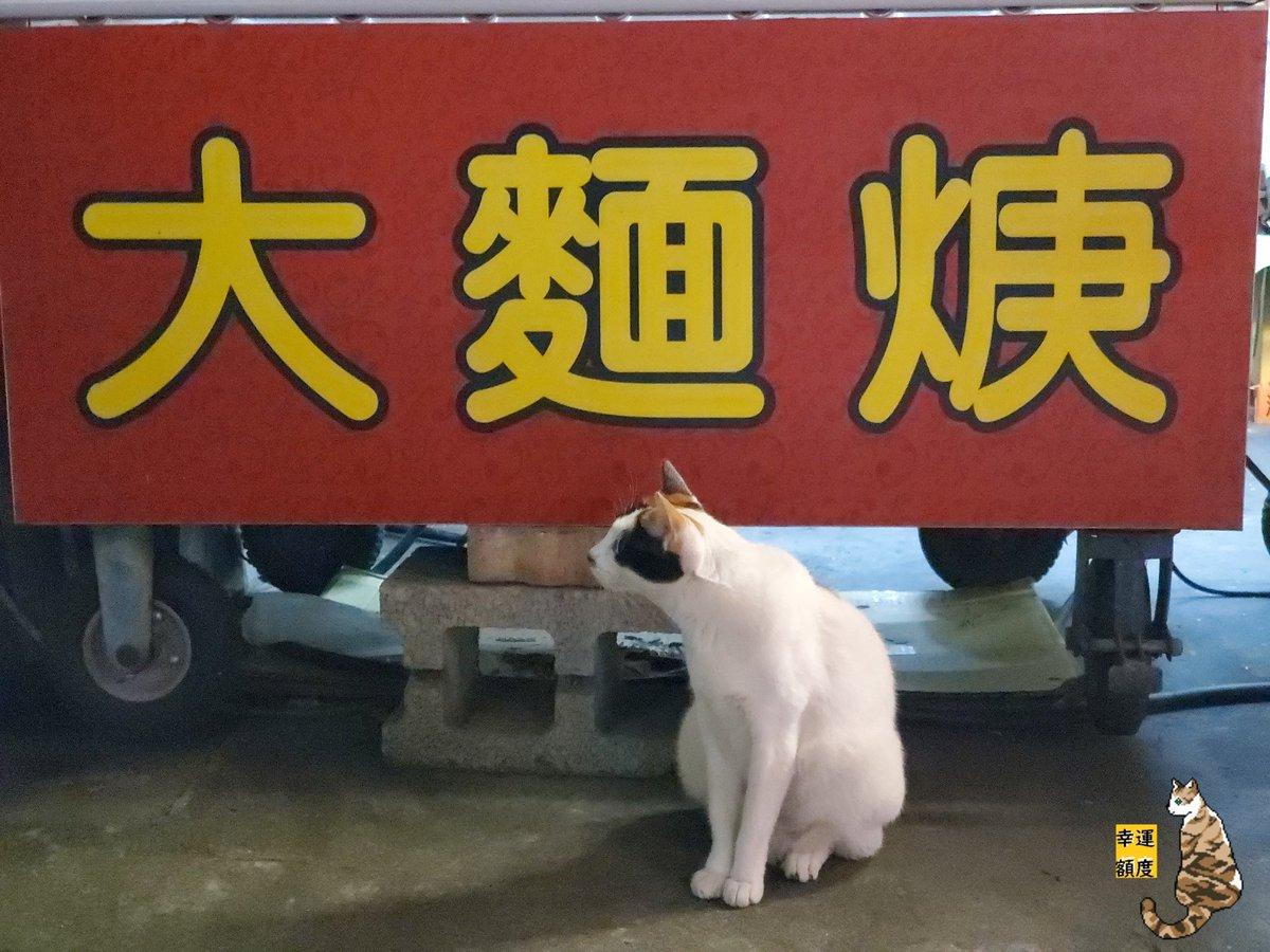 すみません~ ラーメン一つください~ ……… 猫さん:猫缶を払うならあげます。 #幸運額度 #cat #taiwan #猫 #猫好きさんと繋がりたい #猫好き #猫写真 #猫のいる生活 #インスタ映え #貓 #台灣 #台湾 #三毛猫 #野良猫 https://t.co/NK50Ko5dfh