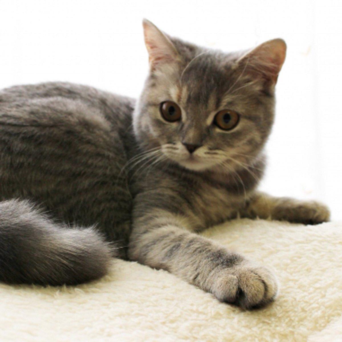 かわいいにゃんこ♪ #ハニーペット #HONEYPET #honeypet #猫 #ねこ #ねこ部 #にゃんすたぐらむ #にゃんこ #子猫 #ネコ #ねこのいる生活 #ねこのきもち #ねこのいる暮らし #kitty #catstagram #petstagram #instacat #meow #instagood #follow #followme https://t.co/2IrjaImsNu