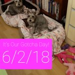 Image for the Tweet beginning: 06/02/18- It's Our Gotcha Day!