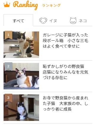 【 #三毛猫 バズり中✨】ただいま、sippoの記事ランキング上位3位までを三毛にゃんが独占! ビバ三毛猫!十匹十色…もとい、三匹三色、それぞれの物語をご堪能あれ。👇ランキング1位はこちら「ガレージに子猫が入った段ボール箱 小さな三毛はよく食べて幸せに」
