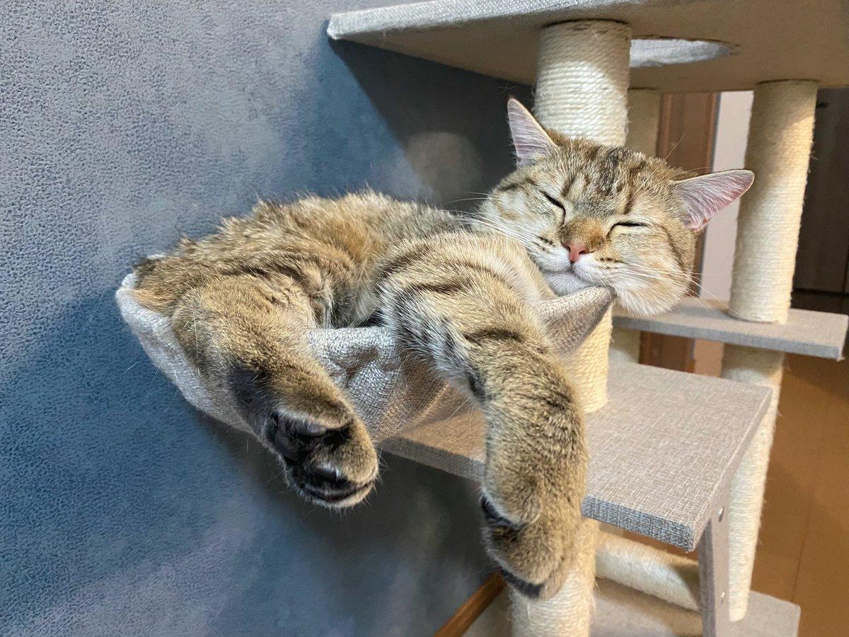 成長しすぎてしまった猫…。