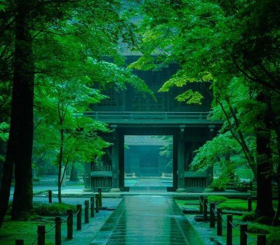 雨の日の平林寺(埼玉)