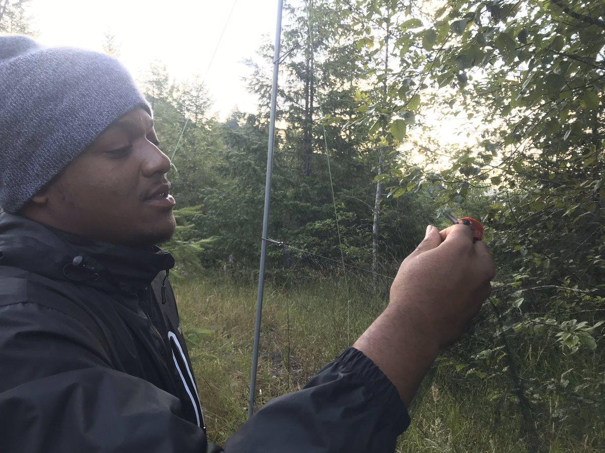 Celebrating birders Najee Shahid & Alaiya Cave #HBCU interns through a @NatlParkService partnership w/ @GreeningYouth Najee is a graduate of @WileyCollege Alaiya from @CheyneyUniv Both became proficient banders during their internships #BlackBirdersWeek #BlackInNature #PostABird https://t.co/4dNhrzyLVJ https://t.co/NiFOmBh5Qu