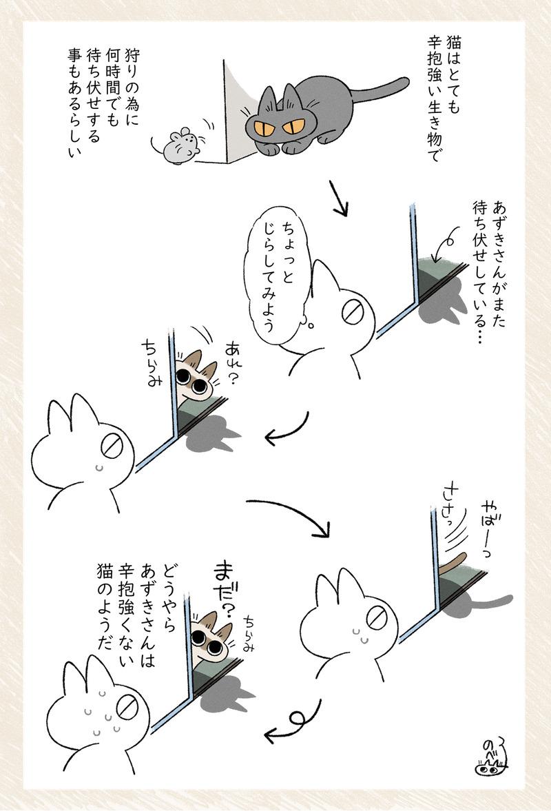 すべての猫が忍耐強いとは限らない話 #シャム猫あずきさんは世界の中心