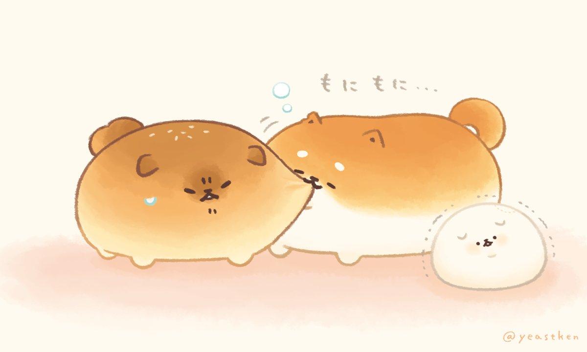 まだ寝ぼけているしばこっぺ…#いーすとけん。 #yeastken #しばこっぺ #とさあんこ