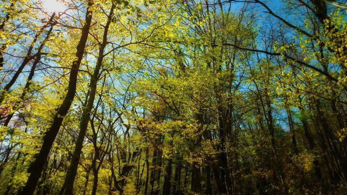BLUE & GREEN   #森 #forest #nature #photographpic.twitter.com/g7tbRoLjTL