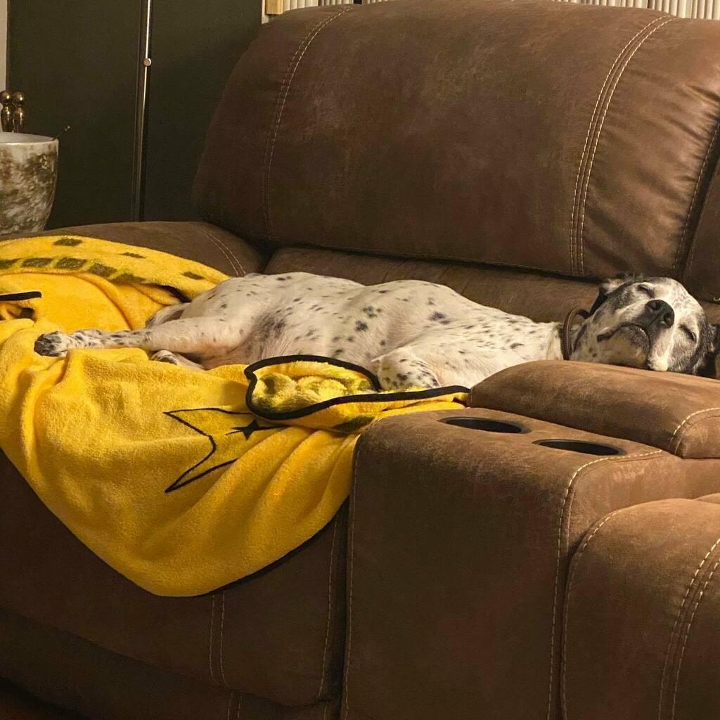 #Maximus isn't feeling well today. #seniordog #sickdoggie #purerescue #lifewithdogs @muttsofinstagram @dogsofinstagram https://t.co/467FnlOxHS https://t.co/zcKevs2LMz