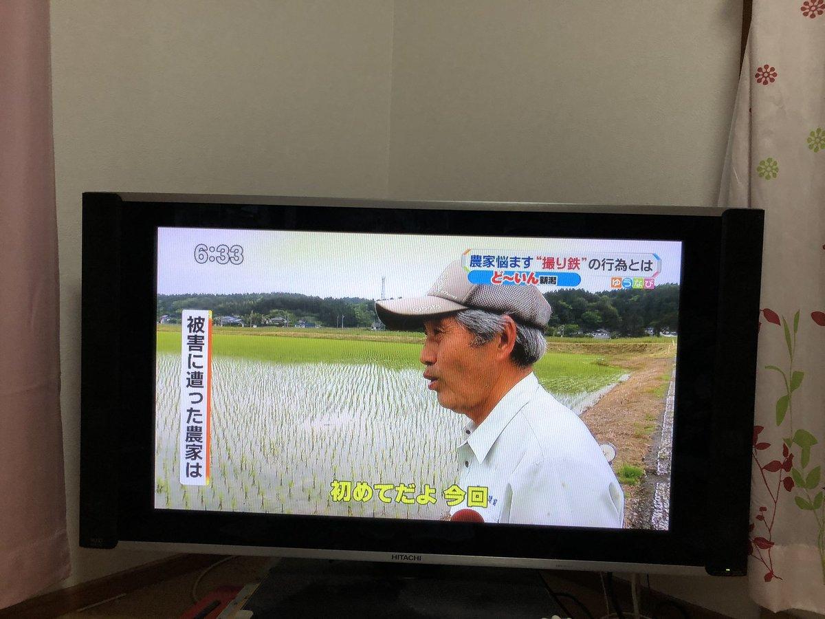 長岡の田んぼリフレクションしたくて勝手に田んぼに水を入れて電車と写真を撮るとかヤバイな