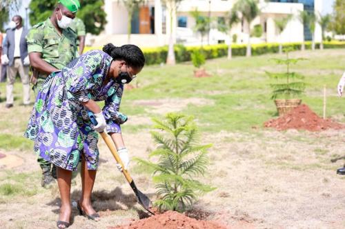 Journée de l'arbre : plus de 500 000 plants mis en terre https://t.co/sczeyPuaL6 https://t.co/6yT3EONUAD