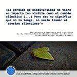 """Image for the Tweet beginning: """"La pérdida de la biodiversidad"""