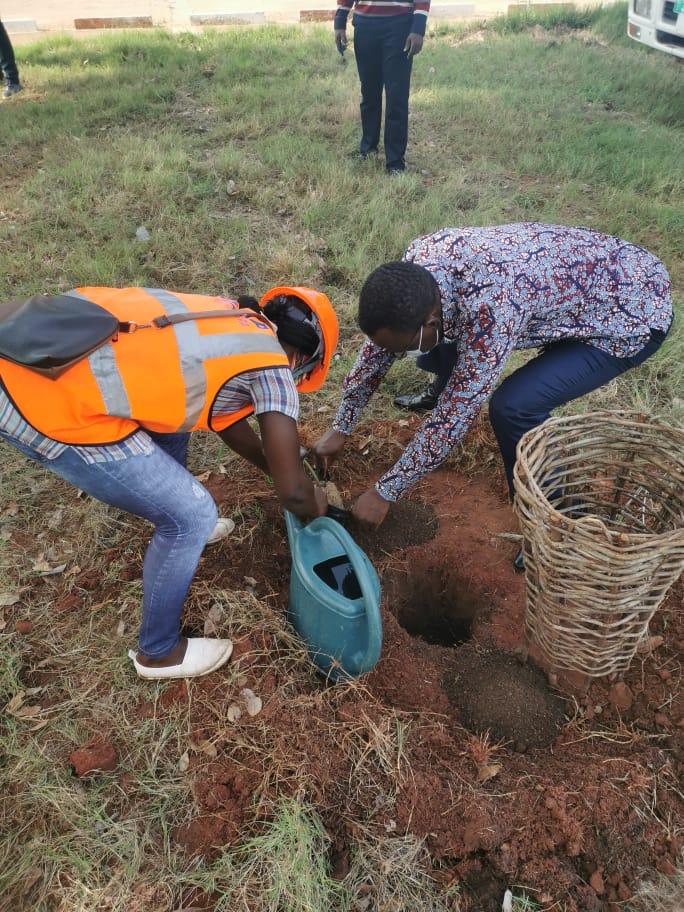 A l'occasion de la  43ème édition de la Journée Nationale de l'arbre, le #CG de l'OTR @PKBTchodie  entouré des responsables de la #CNSS, de la #SGI, de la #LONATO et de #GTA se sont retrouvés sur le Bd Gnassingbé Eyadema et ont procédé à la mise en terre de plants. #OTR #FondVert https://t.co/yH7jLYsxBu