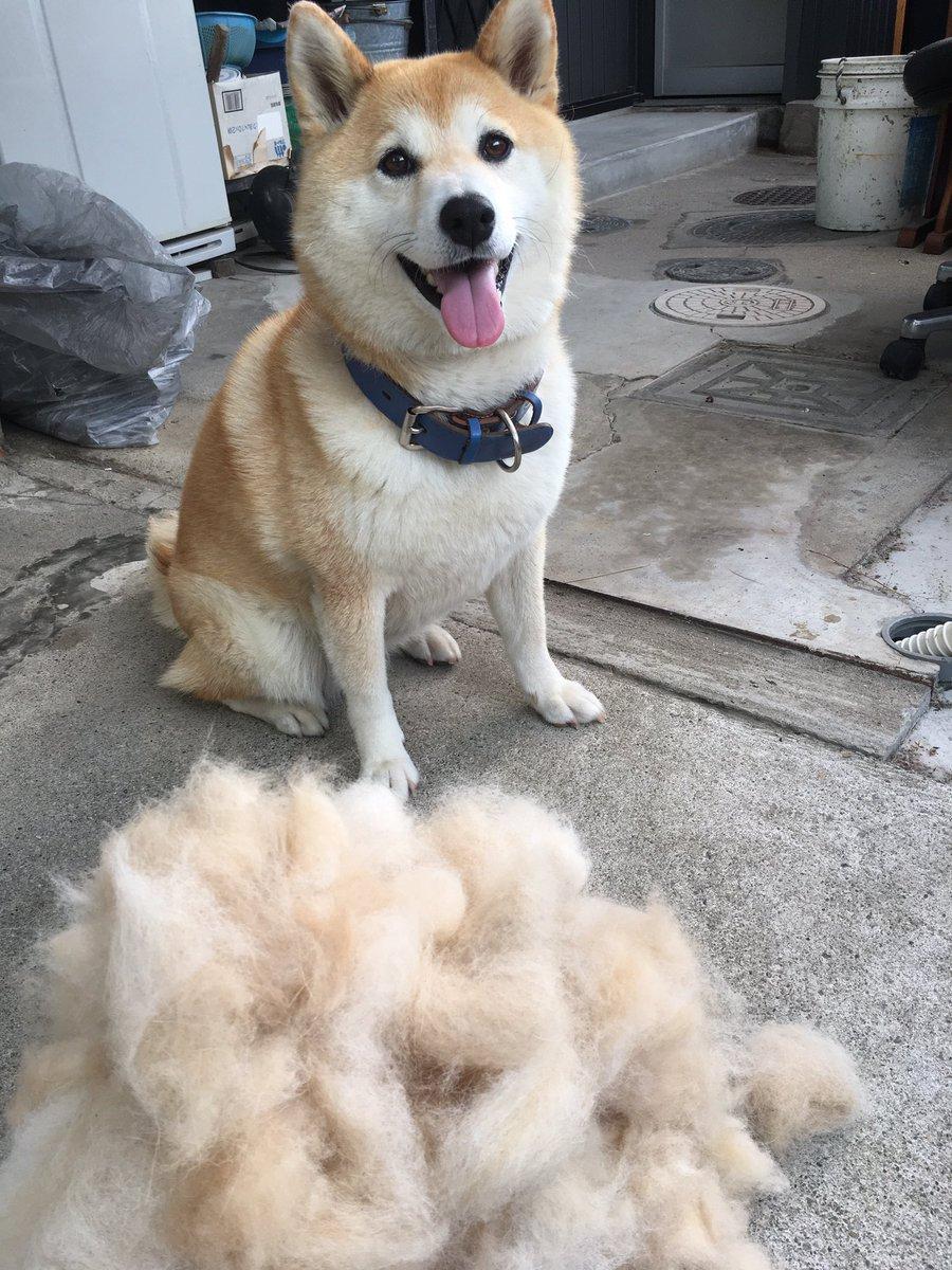 【衣替え完了】春から抜けた毛を集めてみた