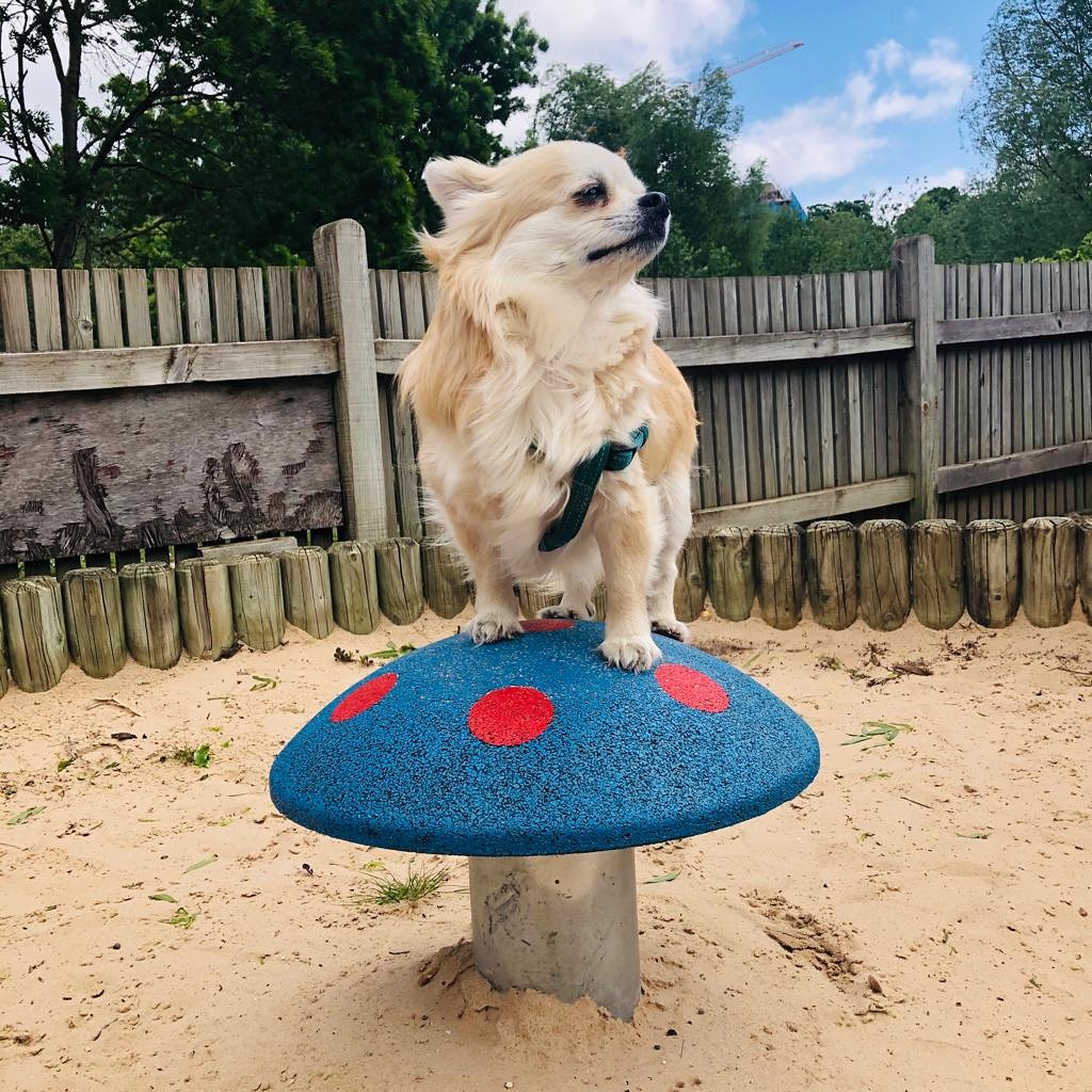 I'm the king of the mushroom Here to chase away gloom See that Spring is in bloom Into the day we zoom  #dogsoftwitter #naturephoto pic.twitter.com/l7swRRvg4E  by Poems For My Dog