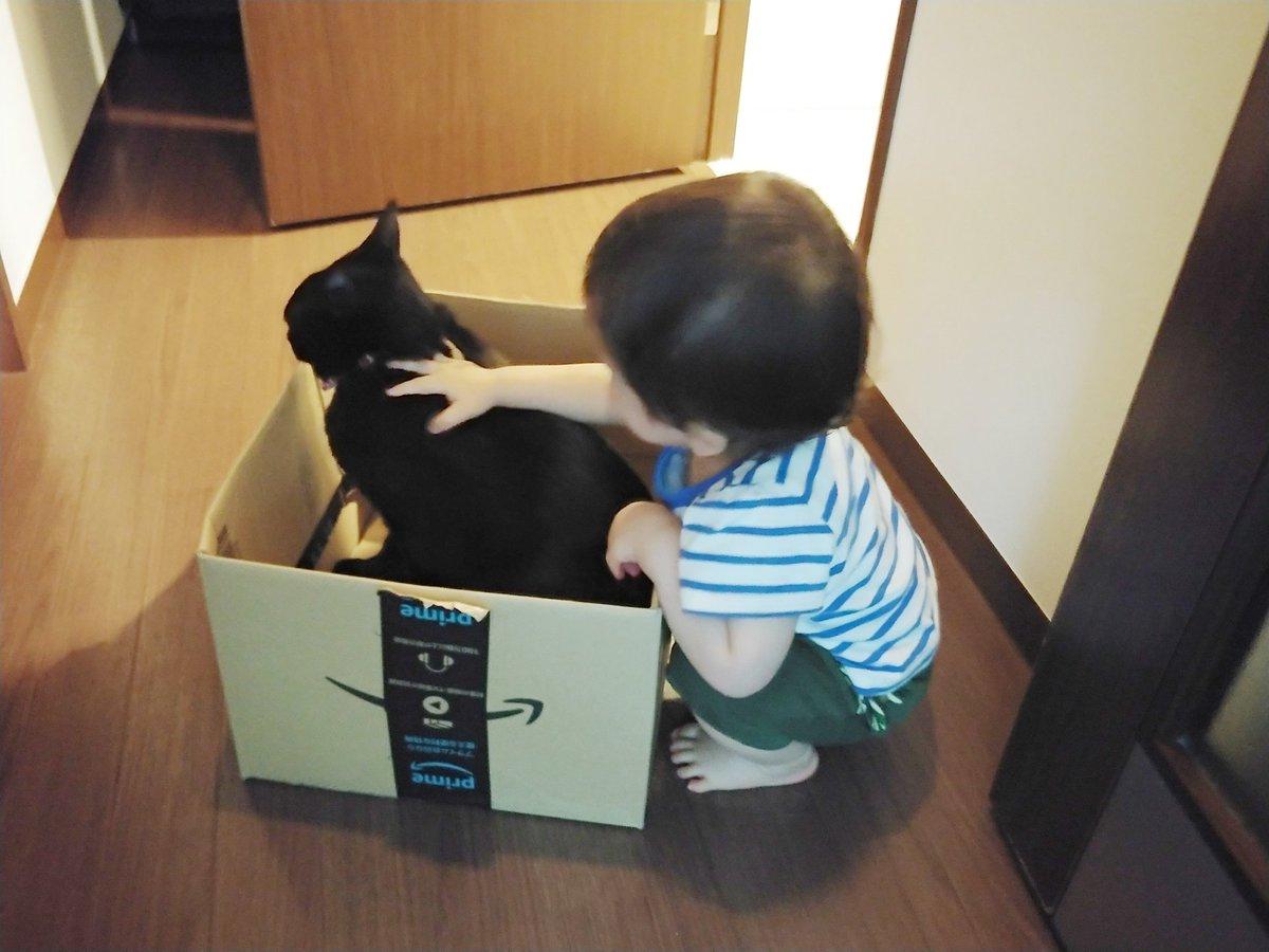 776日目。相変わらず段ボール箱に入っている黒猫を見た1歳児、最初は背中を撫でたり頬擦りしたりしていたがふと、「持ち上げられるのではないか?」と思ったらしい。渾身の力を込めて、大人がやるように黒猫を抱き上げようとしたが、黒猫はびくとも動かなかった。その後1歳児は諦めて去った。