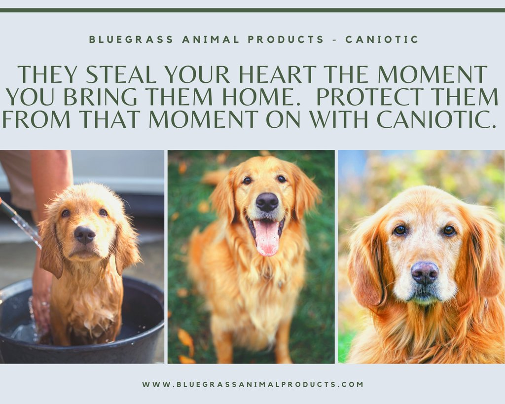We love all the dogs from puppies to seniors ❤️ #dogs #puppy #seniordog #animalhealth https://t.co/E32cmQz4ro https://t.co/jnjr72wAdF