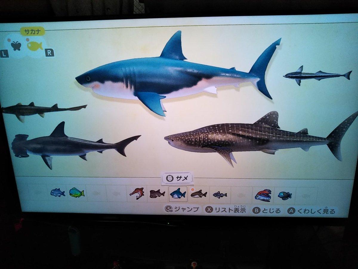 の 種類 森 サメ あつ