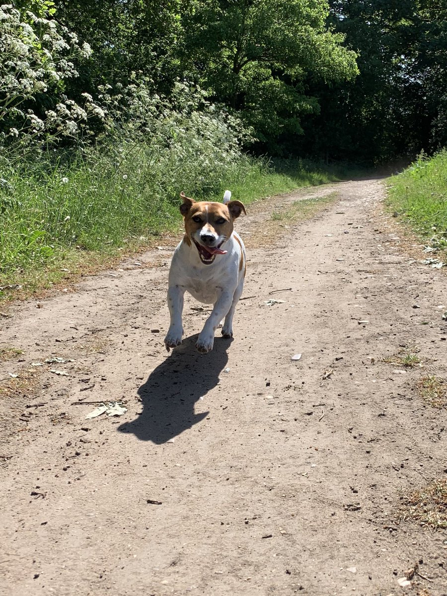 A happy #TongueOutTuesday pals #JRT #DogsofTwitter<br>http://pic.twitter.com/tFJjlLQCBo