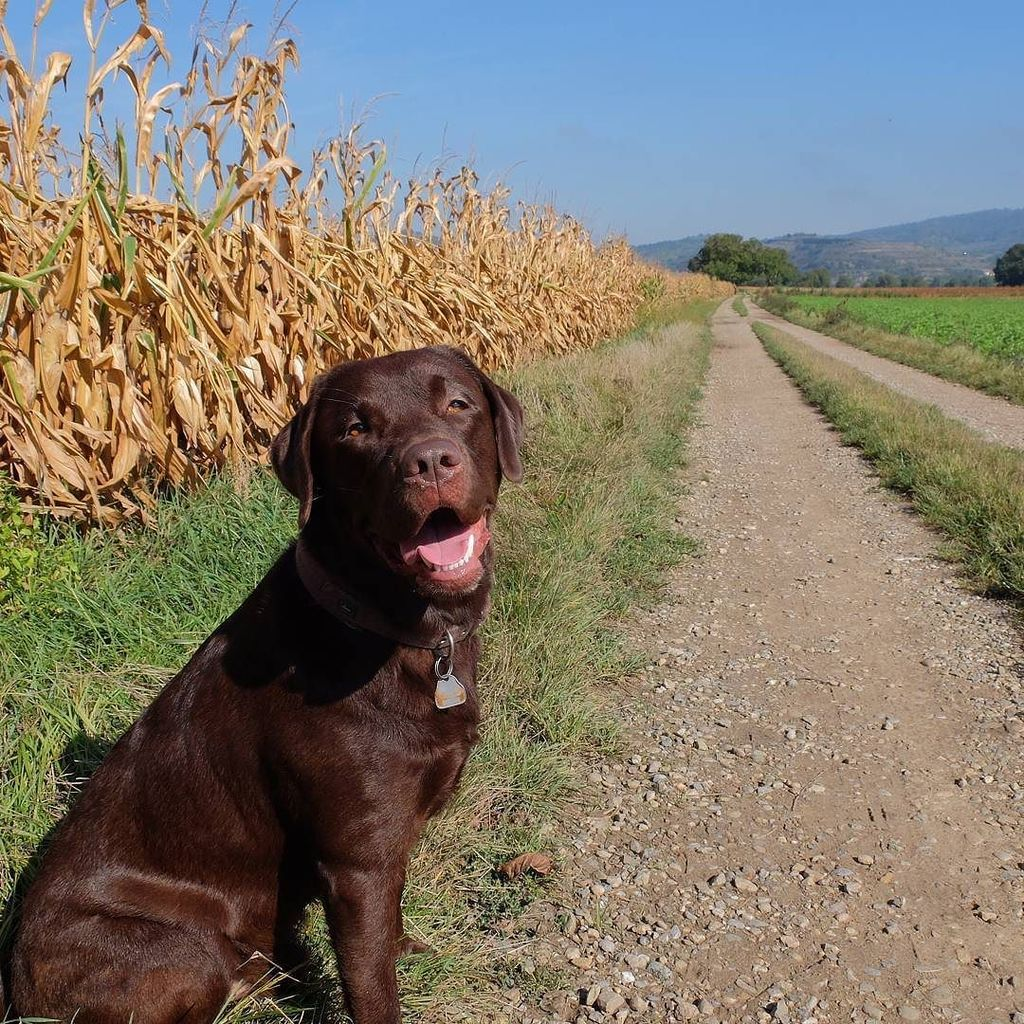 Every path is easier with a #dog at your side. pic.twitter.com/FAJUSEOL7V