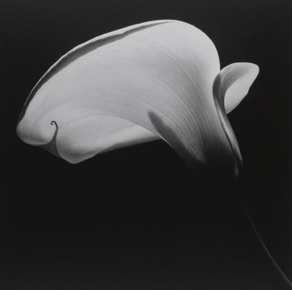 Robert Mapplethorpe #photography. pic.twitter.com/ea4NI3n126