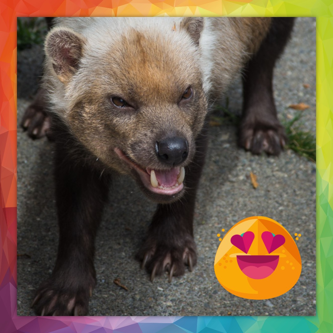 Good Morning! #bushdog #zoo #sequoiaparkzoo As a reminder, the Sequoia Park Zoo is currently closed to help stop the spread of COVID-19 with a reopening date TBD. Thank you for staying in touch with the Zoo through social media! #community #support #friends #family #patrons
