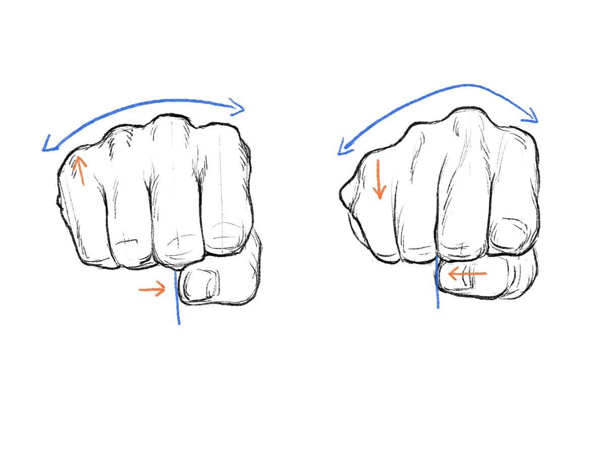軽く握った手(左)と強く握った手(右)。拳を強く握ると、小指と親指がやや近づく(対向)。