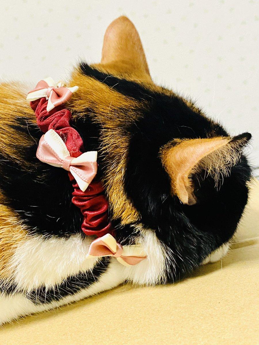 test ツイッターメディア - やや失敗した愛猫のパール調首輪、透明なゴムテグスでリベンジ(´∀`)  その間、きなこもダイソーリボン🎀まみれ🐈  #ダイソー #猫の首輪 #シュシュ #リボン #デコる https://t.co/TY9OAUi4iG https://t.co/3fS6rv8HAG