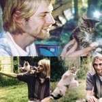 Image for the Tweet beginning: #kurt #Cobain #Apparently #Loved #Cats!
