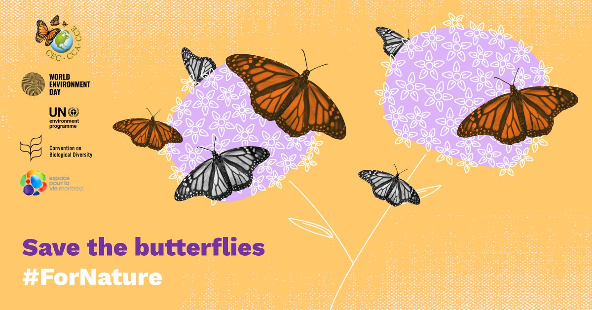 The #MonarchButterfly is a fascinating insect in need of our support!   🌼 🦋 🌼   If you like gardening, be sure to check out @Espacepourlavie's easy guide for creating a butterfly oasis right at home #ForNature 👉🏾 https://t.co/Ui08rn0nuu https://t.co/EO9cS9BLbS