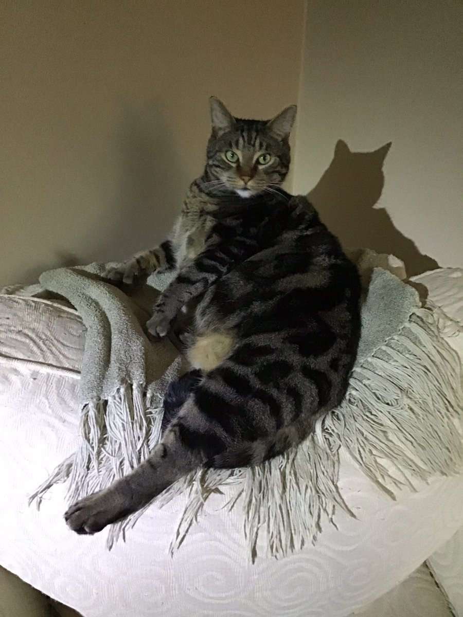From an old glamour modelling session with Joe  #PowerOut #StormDay #CatsOfTwitter pic.twitter.com/acAKEAJe3o