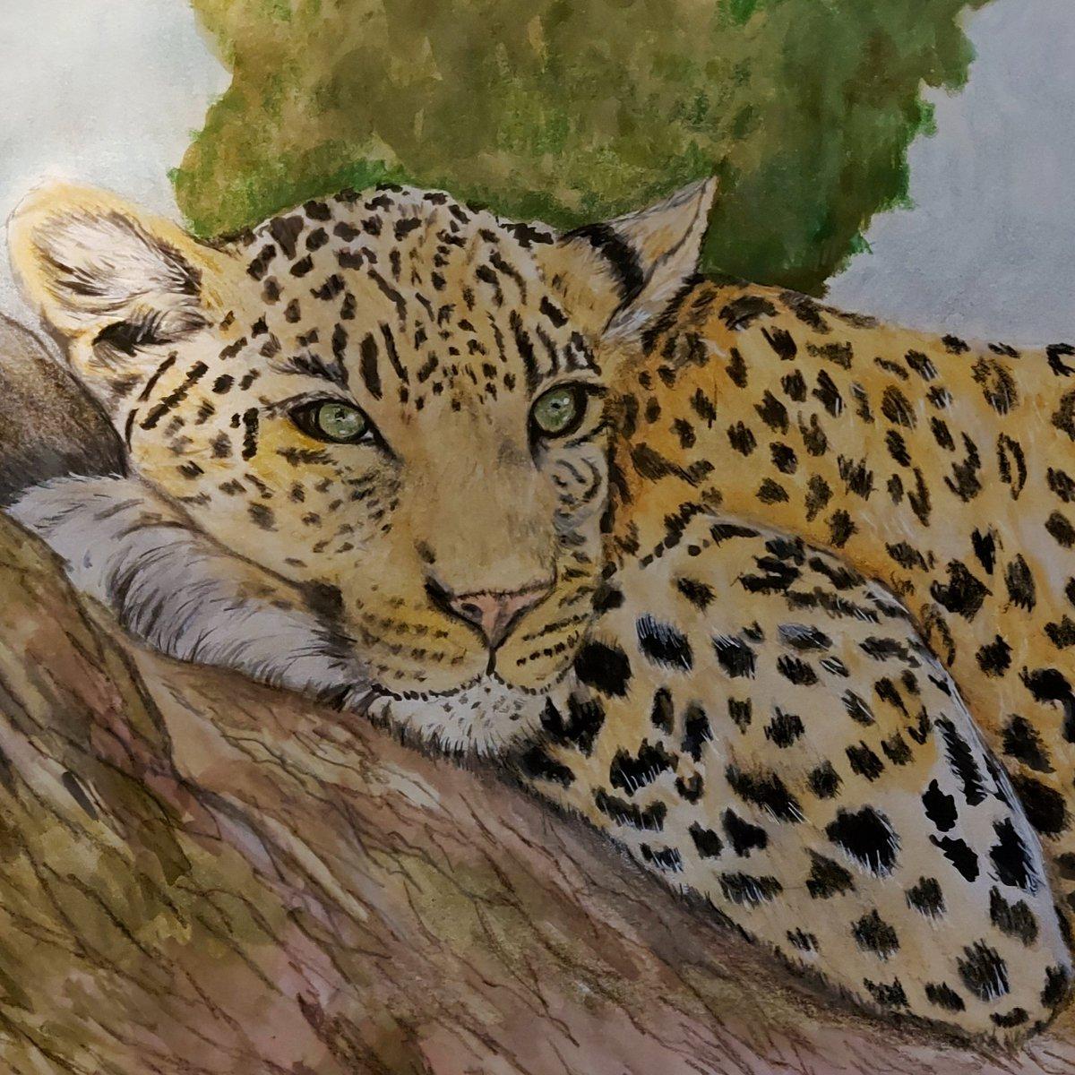 Leopard in a tree #leopard #wildlifeart #artist pic.twitter.com/AFBQhu9Psa