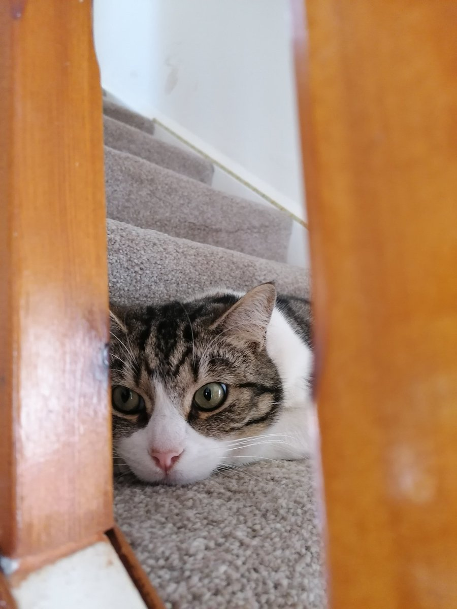 """Eye spy with my little eye, something beginning with """"M"""".... #CatsOfTwitter pic.twitter.com/3QjZw4SHCc"""