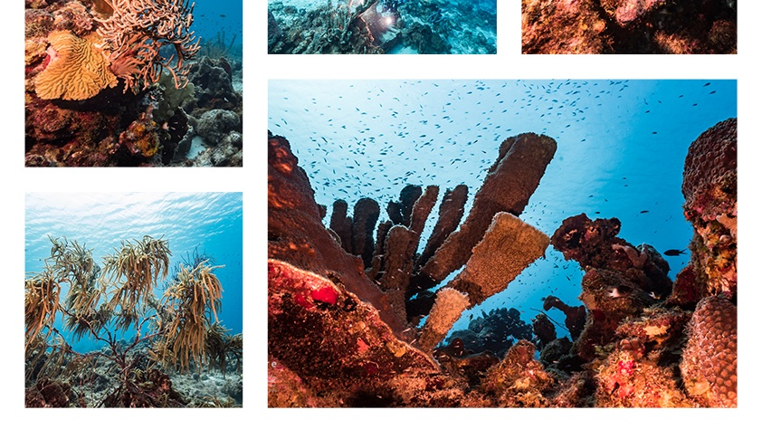 New on stock!  Check out the latest seascapes - taken in the Caribbean Sea around Curaçao - enjoy the beauty of underwater world!  #seascape #stockfootage #underwater #underwaterphotography #naturepicsfilms #caribbean #ocean #curacao pic.twitter.com/v9IxX6TlXF