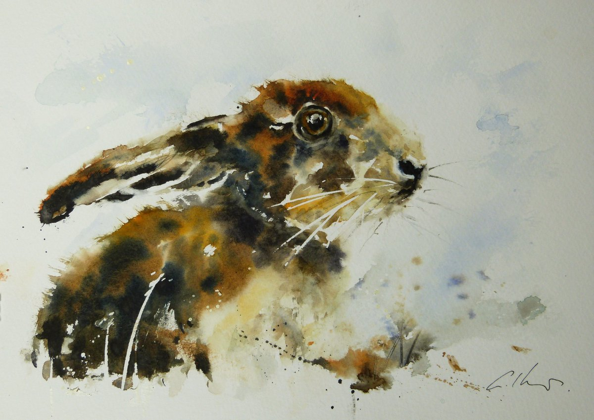 Young Hare, watercolour #watercolour #hare #painting pic.twitter.com/ImgWZMJWXn