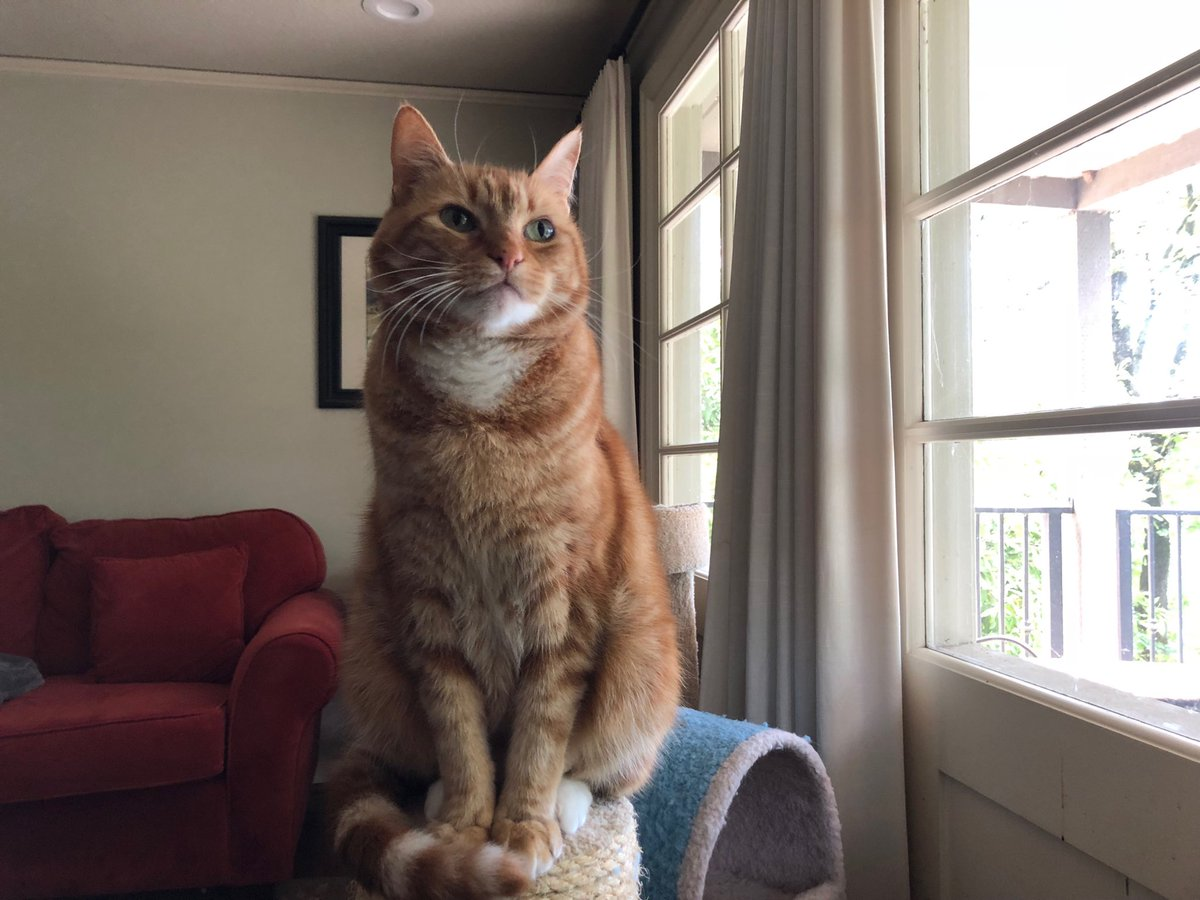 Garfield, preparing for a second career as a nude art model.  #CatsOfTwitter pic.twitter.com/yNxBIqhlgD