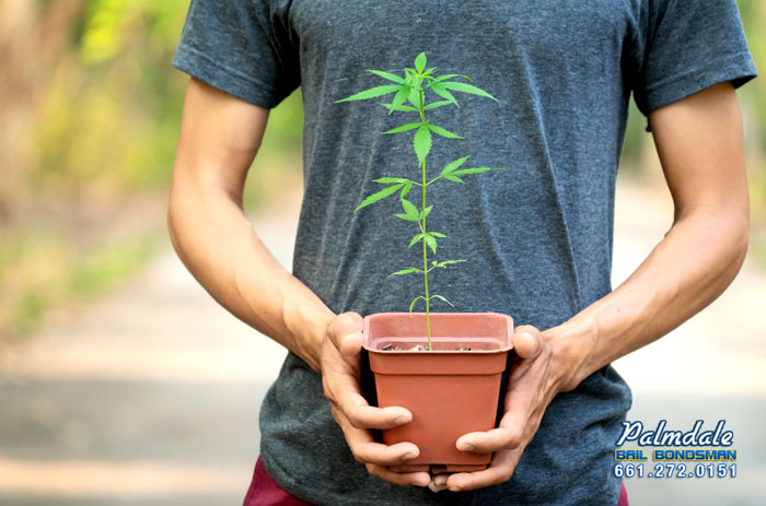#TransportingMarijuana in California  A big thing that people need to worry about when dealing with marijuana is transporting it. Here's what you need to know about marijuana transporting and DUI. #Marijuana #CAMarijuana #MarijuanaLaws #Possession https://palmdale-bail-bonds.com/transporting-marijuana-in-california/…pic.twitter.com/hEQMudVtq5