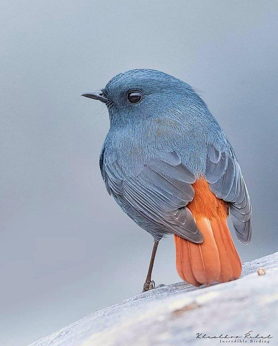 So cute   #nature #NaturePhotography #NaturePhotography #birdspic.twitter.com/RdkacofWVK