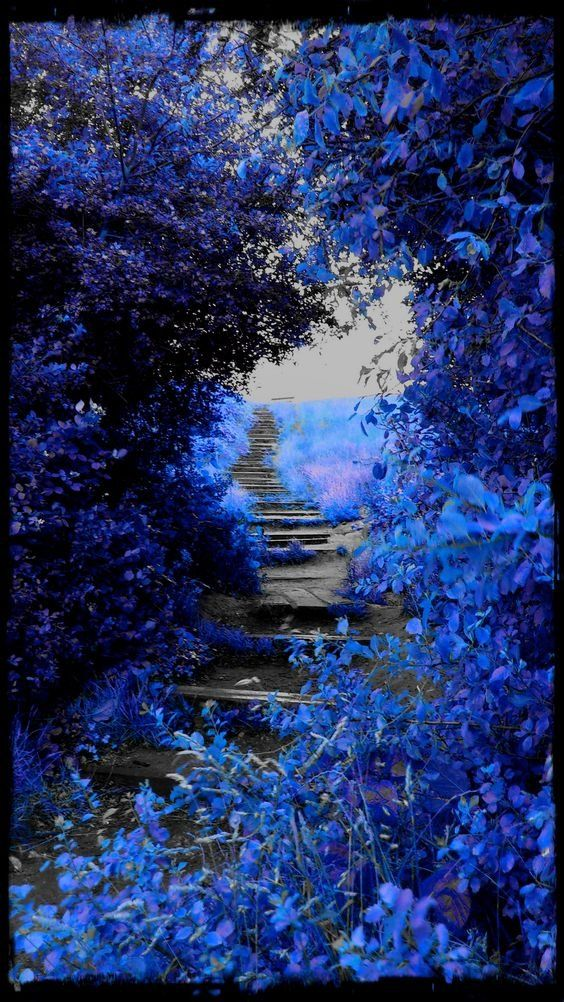 I'm dreaming in blue #photos #dreams #blue #Tuesdayphotospic.twitter.com/1tIQQgnC9g