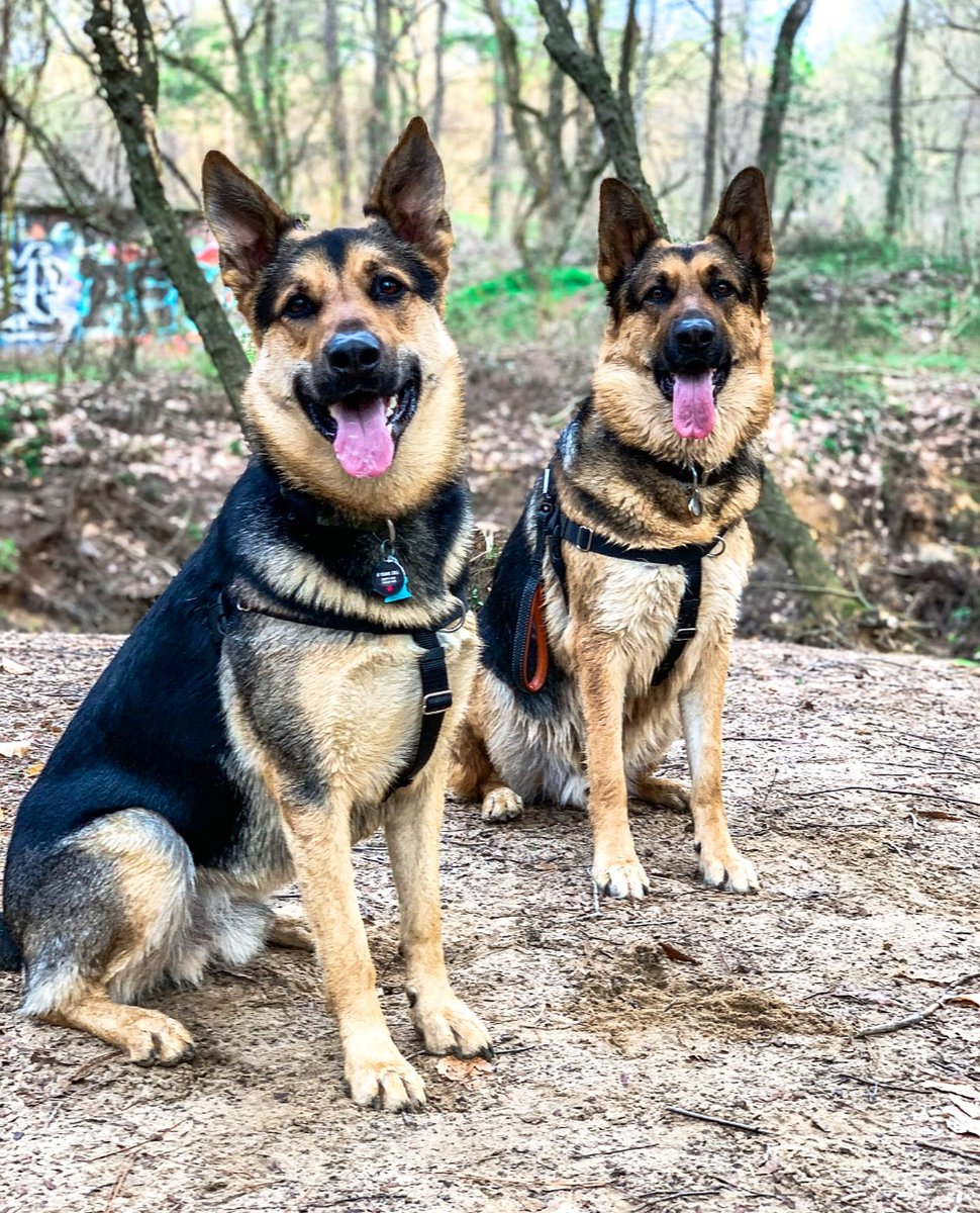 What's better than tongue out Tuesday? Double Tongue Out Tuesday!  Achilles & Atticus . . . #atlantapetlife #dogist #atlpets #furendly #atlantapets #atlantadogs #dogfeature #weratedogs #dailybarker #bestwoof #dogfeatures #topdogphoto #dailydog #dogsofatlanta #dogsofatlpic.twitter.com/nAaGkz0nHu