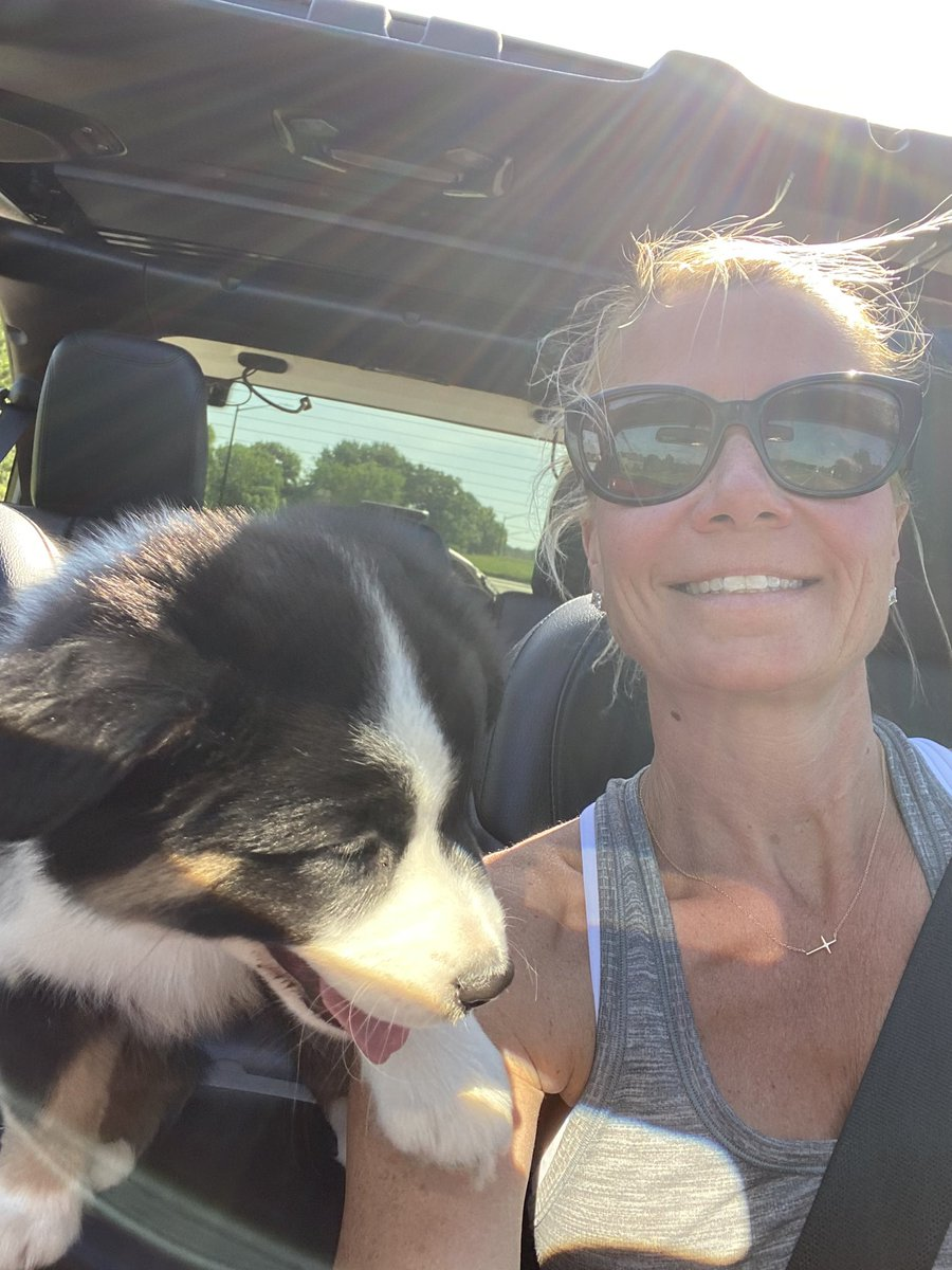 This little puppy likes to ride shotgun in the #JeepWrangler. A little wind in our hair and sun on our face is good for us both. #Miniamericanshepherd #jeeplife #rubicon #jeepmamapic.twitter.com/KSI8kdppu8