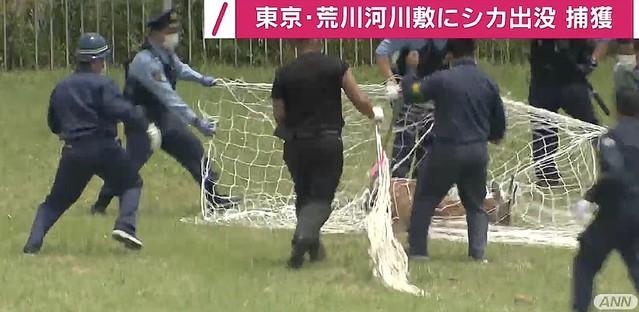 【速報】東京・荒川の河川敷に出没したシカを捕獲きょう3日午前9時ごろ、堀切橋付近で見つかり、区や警視庁の職員が大きなネットを持って取り囲み、午前11時半すぎに捕獲された。