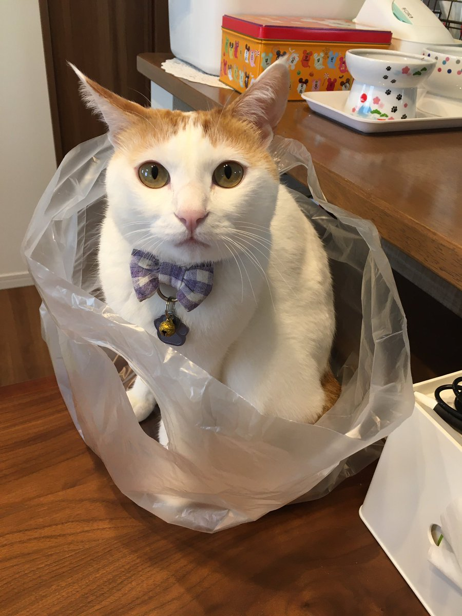 え?このビニール袋捨てちゃうんですか?