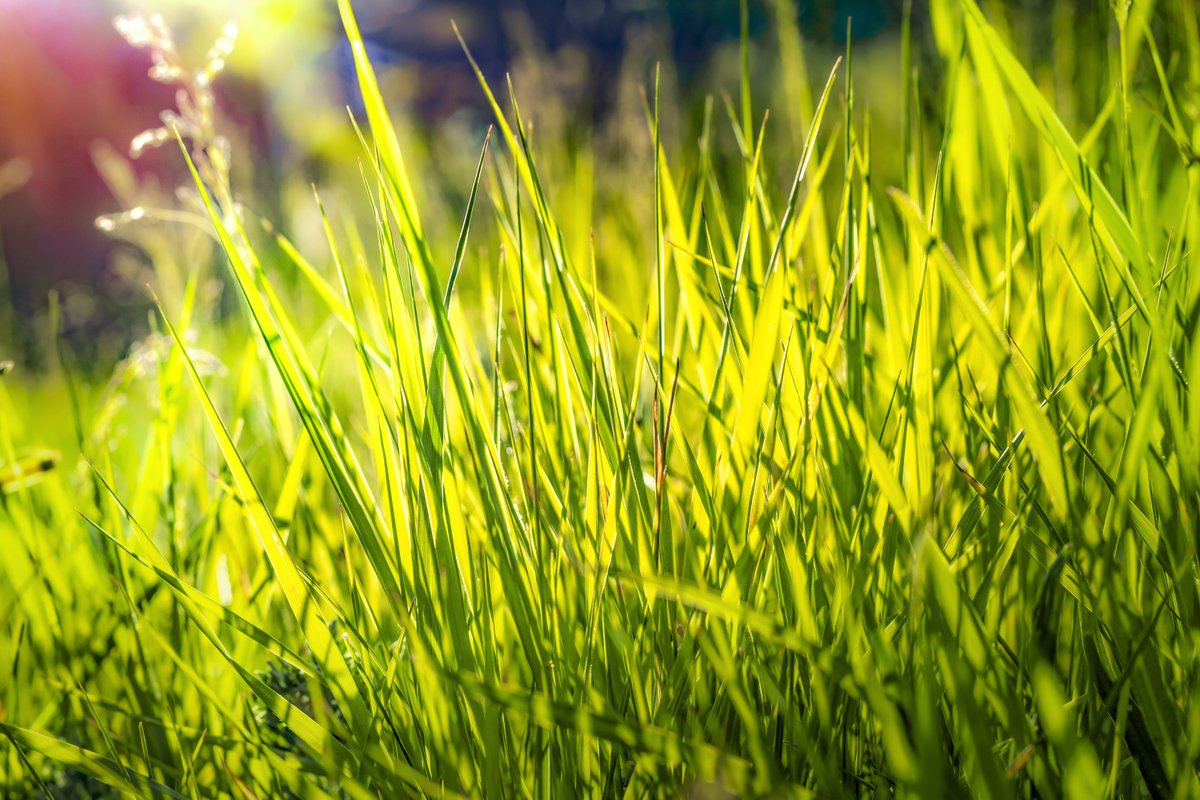 #Rarach_photo, #grass, #green, #nature, #field, #spring, #summer, #meadow, #plant, #fresh, #sun, #lawn, #sunlight, #sky, #bright, #natural, #sunset, #agriculture, #landscape, #sunny, #abstract, #grow, #flora, #morning, #growth, #beautiful