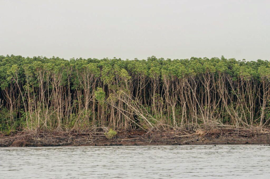 We are facing one more #cyclone today. So let me remind you. #Mangroves;  - acts as buffer & reduce impact of cyclones & #storm surge. - they break the #wind force - provide #habitat to #animals during cyclone or otherwise - they reduce #pollution.   We just need to protect them.pic.twitter.com/cG099fQTaa
