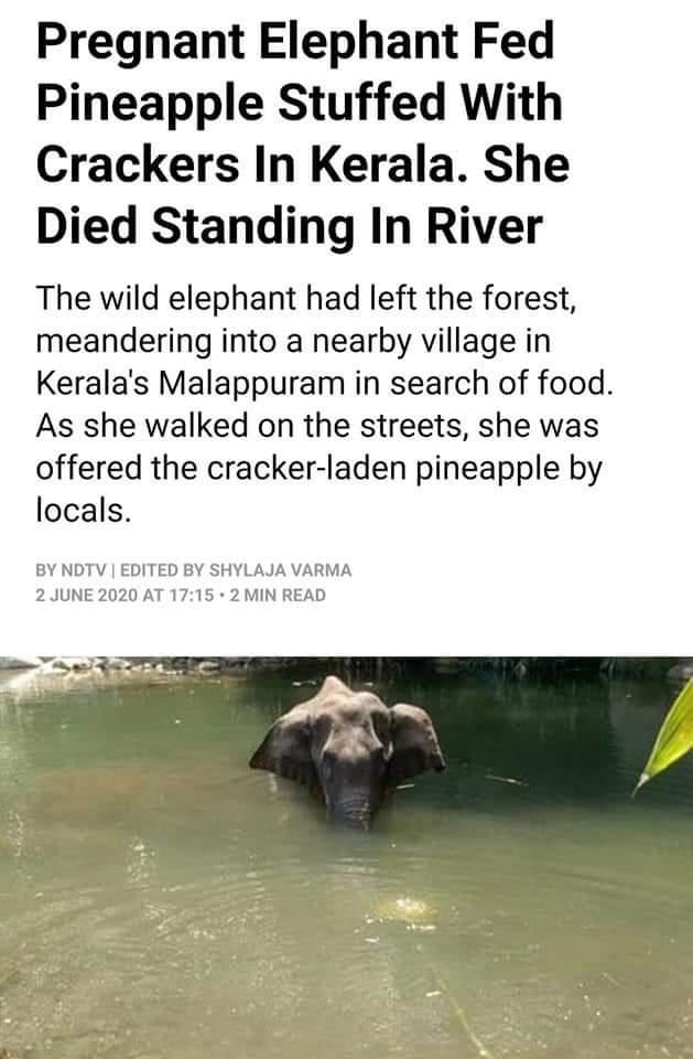इंसान - अभी तो और नीचे गिरना है साहेब  जरा भरोसा अभी भी बाकी है हम पर,,,, #Elephant pic.twitter.com/xAkkEN9qHG