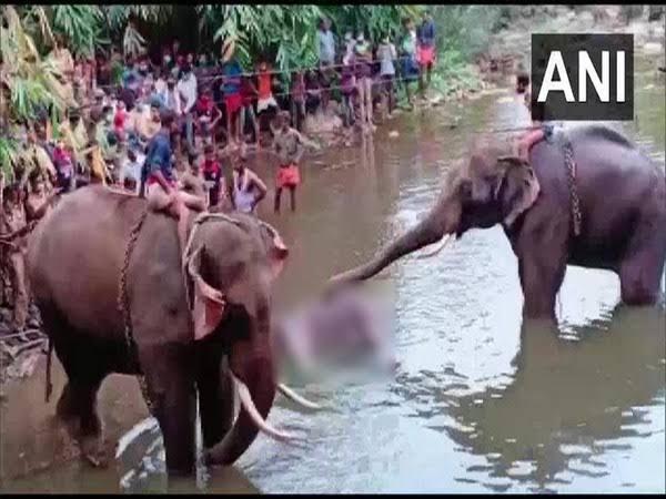 "एक बेजुबान से ऐसा धोखा!!  नफरत की दुनिया को छोड़कर प्यार की दुनिया में खुश रहना मेरे यार....  She has no rights....Will she get the #Justice  #AnimalRights #worstcruelty #kerala #Elephant वह इंसान नहीं राक्षस थे।  ""हाथी मेरे साथी""@PMOIndia @myogiadityanath @PrakashJavdekarpic.twitter.com/z7IrCYzmpg"