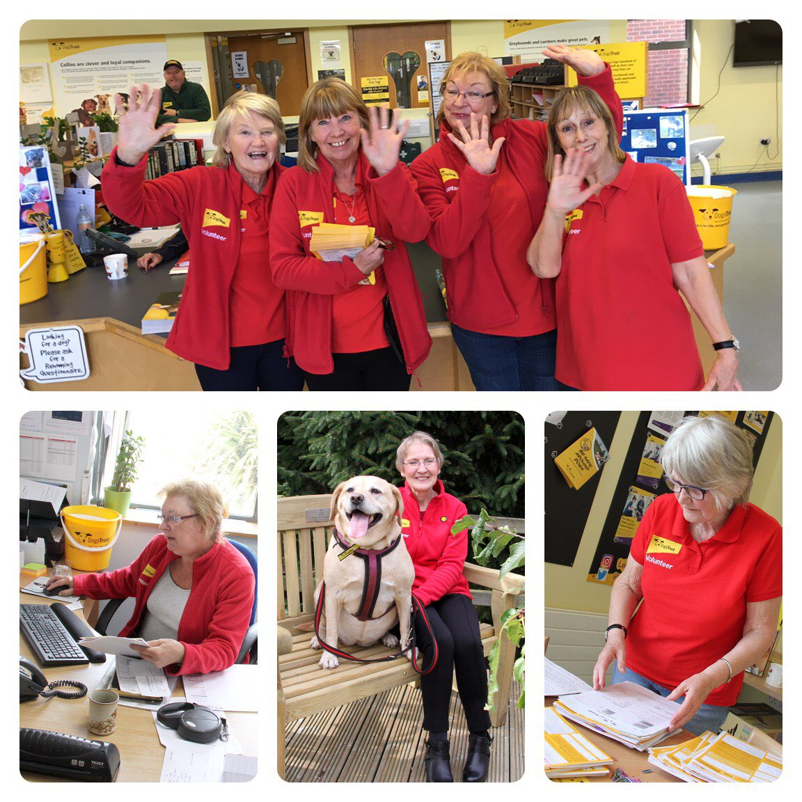 💛#Thankyou so much to our FABULOUS Admin #Volunteers!💛  They make a huge difference our centre. We think they're wonderful and can't thank them enough!  #volunteersweek #nationalvolunteersweek #tuesdaymotivation #charityvolunteers #rescuedogs  @DogsTrust