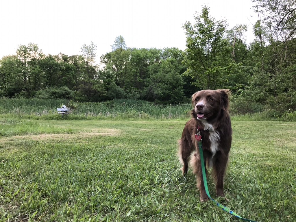 Lucy Pascale Farm Park @TewksburyNJ  #AntiSocialDistancing #hiking #hikingwithdogs #PhysicalDistancing #SocialDistancing #TuesdayMotivation