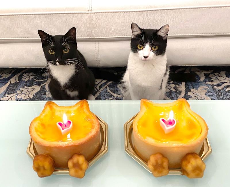 #藤あや子 さんが愛猫の #マルオレ が1歳の誕生日を迎えた事を報告🎂😍🙌‼️マルちゃん💜オレちゃん🧡の可愛いショット公開🐈💨「2人が居てくれるだけで       毎日がHAPPYです✨」☺️💜❤️💜❤️@fuji_ayakoログはこちら⬇️